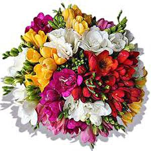 Bouquet_4d6bbfd29c814