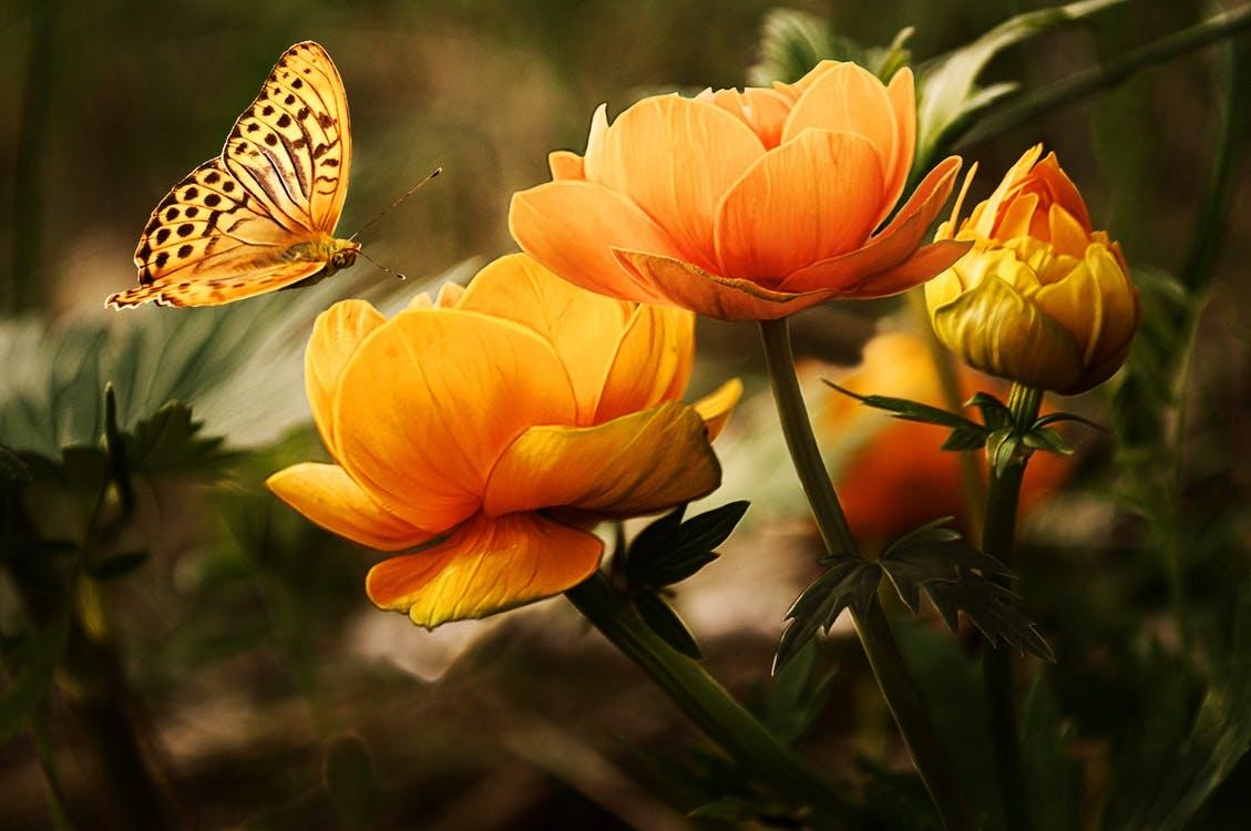 flowersbackgroundbutterfliesbeautiful87452.